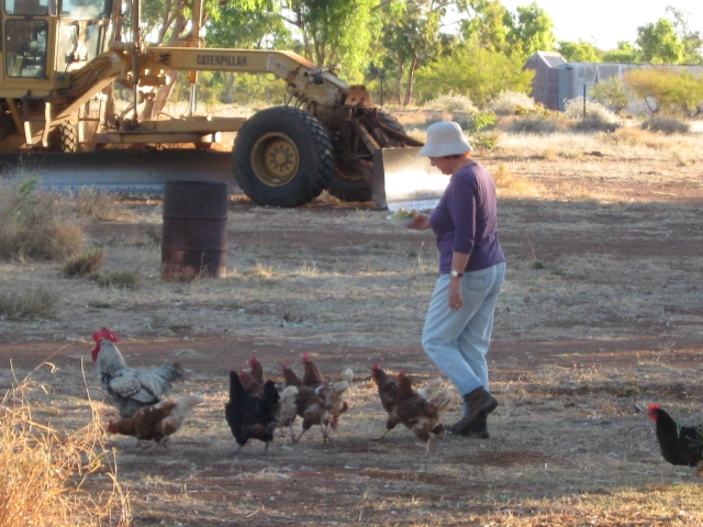 Jan with Chickens