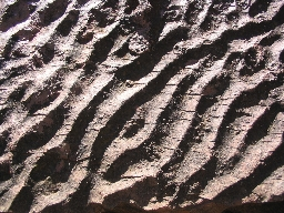 Fossil Waves